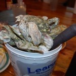 A bucket of oysters