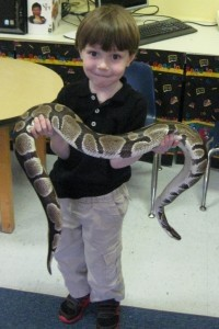 Courtesy of the PreK Star of the Week Jack Adams and Ms. Beth from the Critter Zoo in Savannah, the Beaufort Academy PreK and Kindergarten students had some visitors, including baby bunnies and rats, snakes, a hedgehog, and two different tortoises.  Ms. Beth introduced all of the animals and talked about animal safety. PreK student Liam Gibbons holds the boa constrictor.