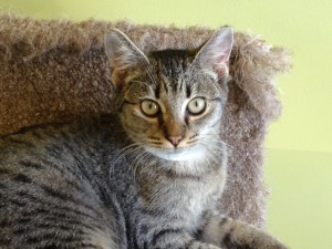 Benji is as sweet of a cat as you could ask for. When you meet her you will be hard pressed to resist her charm; she's here with her sister who is just as elegant. They are spayed, up to date on vaccinations, and microchipped. Come meet them both 12 to 7 p.m.. at the Palmetto Animal League adoption center. For more info on this pair, call 843-645-1725 or email info@palmettoanimalleague.org.