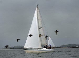A line of birds coasts past a sailboat racing her way down the Beaufort River on Saturday as part of the Beaufort Race Weekend sponsored by Beaufort Yacht and Sailing Club on Lady's Island. Photo by Bob Sofaly.