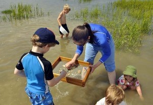 Laurie McNeill and her children use a sieve to sort out shark's teeth and other fossilized artifacts on Saturday at The Sands in Port Royal. The McNeill's drove all the way from Savannah, Ga., to search for the fossils.
