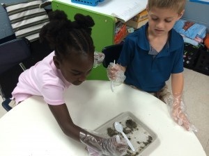 Kindergarten students in Ms. Newton's class at Bridges Prep became scientists last week and used their five senses to conduct an experiment. They made hypotheses, or guesses, before conducting their experiment as to what they thought would happen. They worked in groups to see what they would find inside an owl pellet. They were shocked to see the many small animal bones there were in the pellets. They then determined if their hypotheses were correct and made a conclusion as to what an owl must eat if they found so many bones in their pellets.