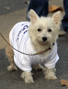 Aubraey, a 5-year-old West Highland Terrier was all bundled up against the cold as he and his human, DeeAnn Sanders of Ridgeland, get ready to run in the fourth annual Island Charities 5K.