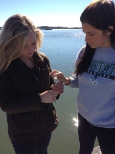 The BA environmental science class went to The Sands at Port Royal to assess the water quality of the local estuary. They took water samples to test for Coliform Bacteria, pH, temperature, nitrate and phosphate levels, turbidity, dissolved oxygen and biochemical oxygen demand. Part of the lab was to assess the potential impact that each land use has on the local estuary. ABOVE: Carlyle O'Herron and Allison Alvarez observe a sample.
