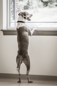 PETS - SEPARATION ANXIETY 2