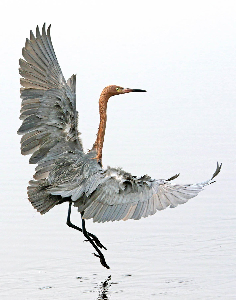 """""""Dances for Dinner"""" by Fran Baer, the Camera Club of Hilton Head Island, won first place in the Expert category."""