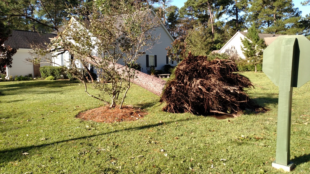 A tree and its entire rootball was lifted up like a toothpick at Eagle's Pointe in Bluffton during Hurricane Matthew. Photo by Sally Mahan.