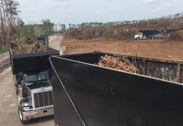 """Self-loaders lined up at the Naples, Fla., Debris Recovery Site known as """"Recovery,"""" where they unload their vegetative debris in advance of its being ground into mulch and sold for biofuel."""