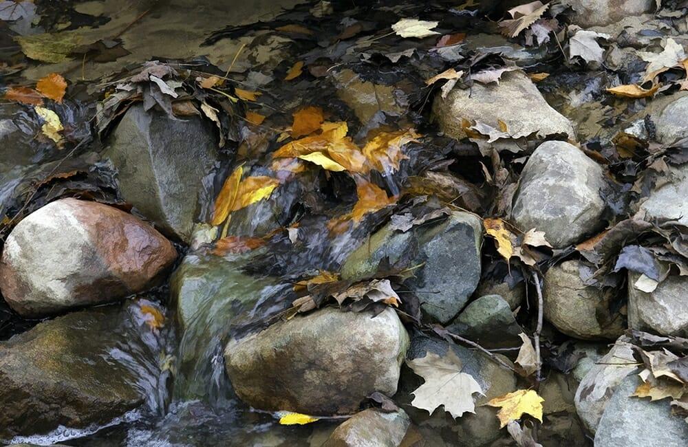 """Leaves in the Stream"" by Karen Gottschall"